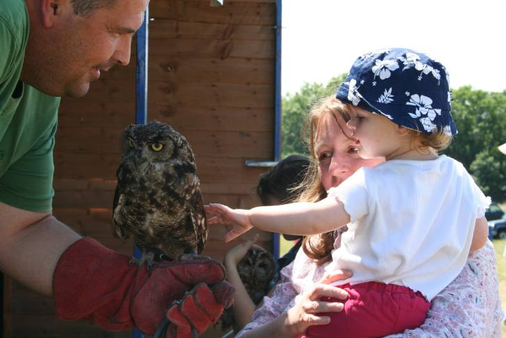 owl and child